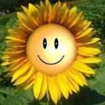 Sonne 7776 profile picture