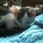 Cat1811965 Profile Picture