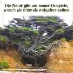 Naturbewustsein Profile Picture