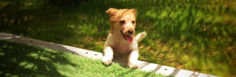 Hund Marlo Cover Image